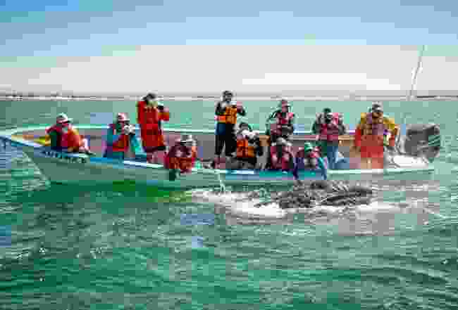 Whale watching in Baja California Sur (Phoebe Smith)