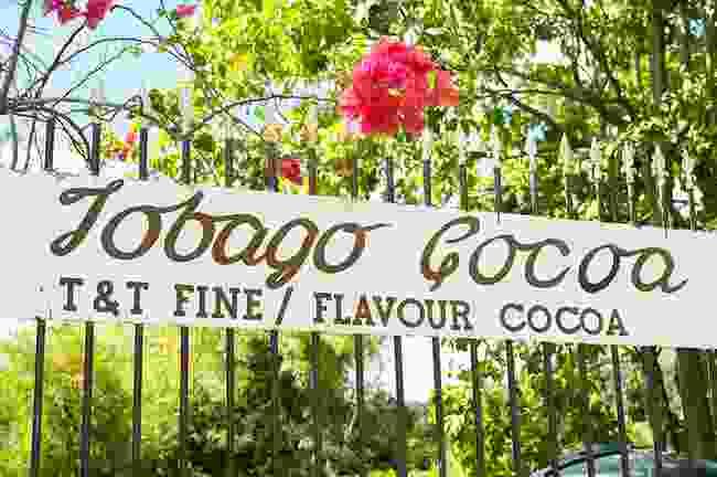 Make chocolate (Tobago Tourism Agency Ltd)