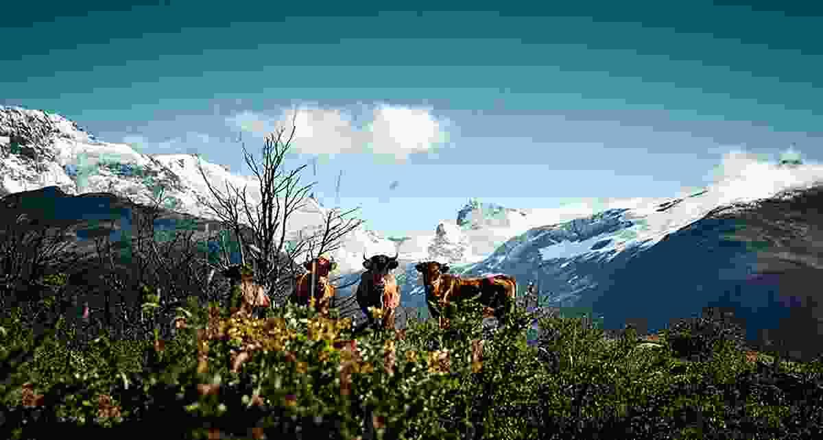Criollo Patagónico, Santa Cruz Province, Argentina, © Werner Lampert GmbH, (Photo Ramona Waldner)