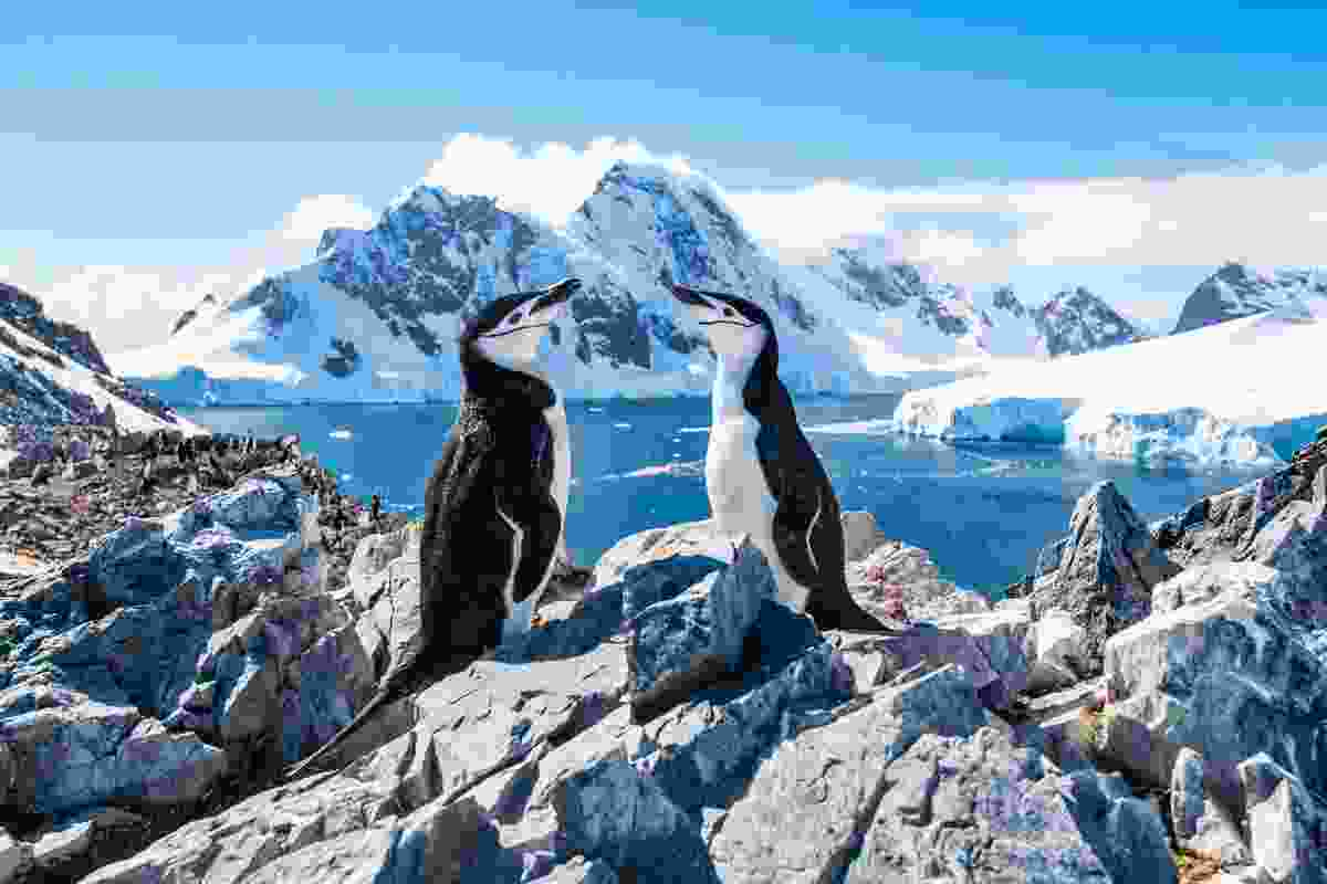 Chinstrap penguins in Antarctica (Shutterstock)