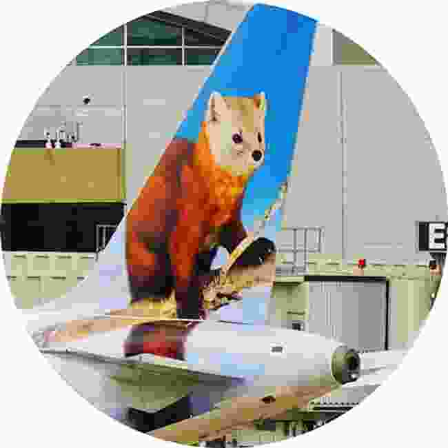 A red panda gracing the tail fin of Frontier Airways (Shutterstock)