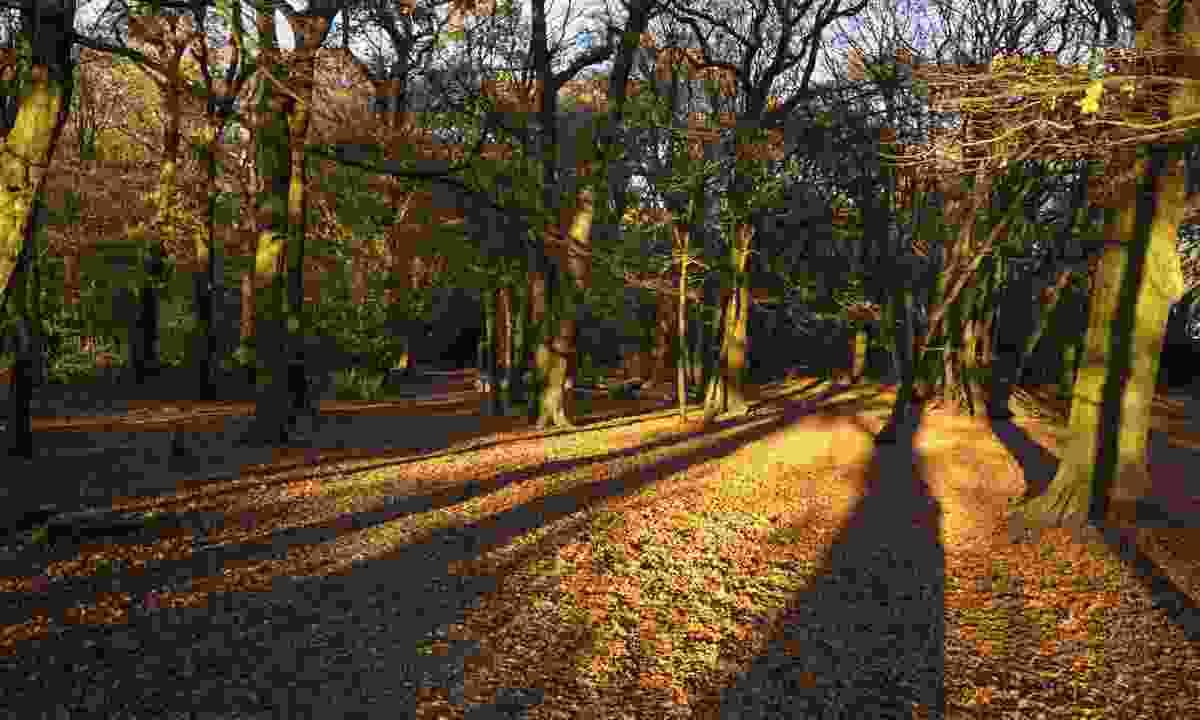 Autumn leafs in Highgate Wood Park (Shutterstock)