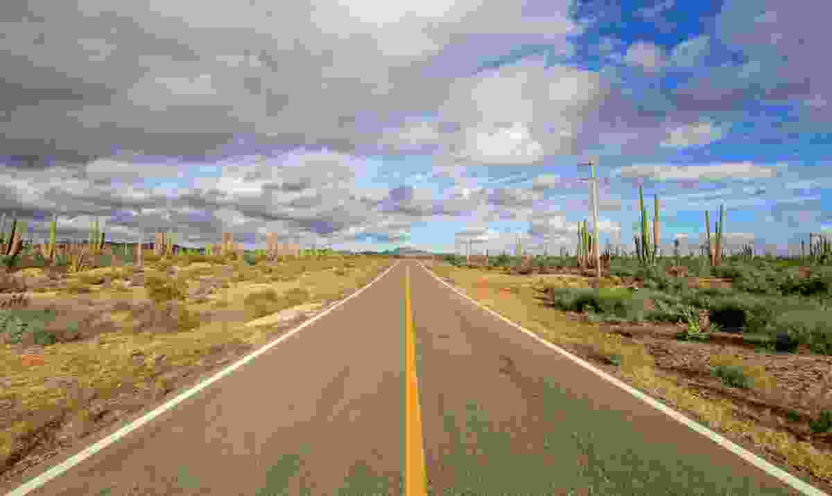 Cactus-lined road in Baja California (Dreamstime)