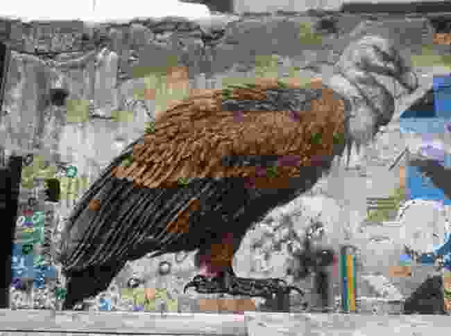 Griffon vulture, Madrid (ATM)