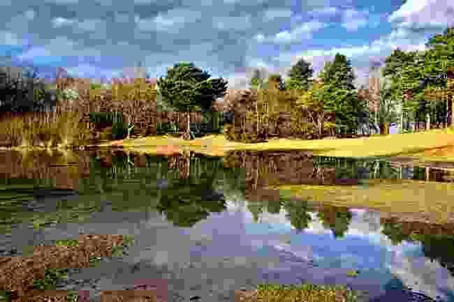 Horsell Common (Shutterstock)