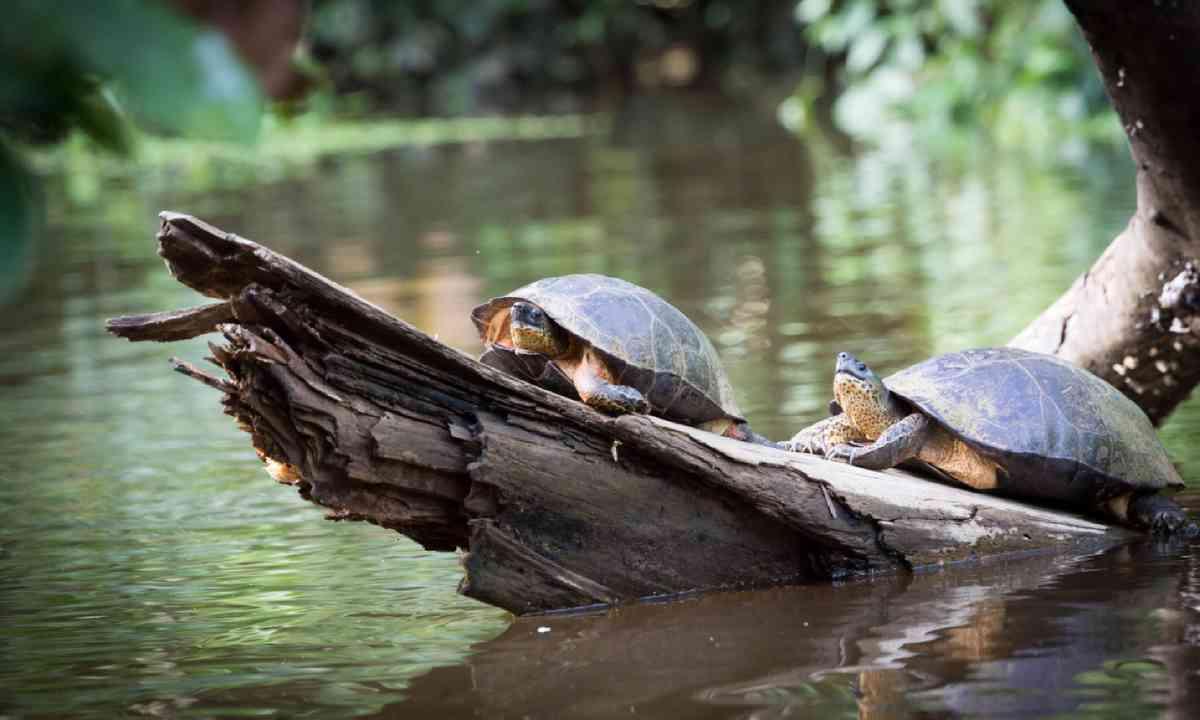 Tortuguero National Park (Shutterstock)
