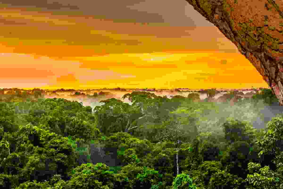The Amazon rainforest (Shutterstock)