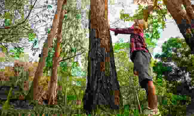 What is 'forest bathing'? (Shutterstock)