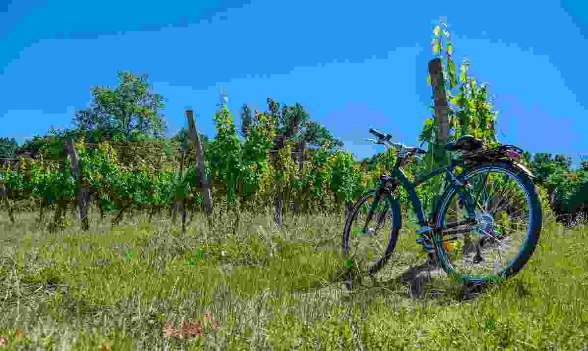 A bike in a vineyard in Saint-Émilion (Shutterstock)
