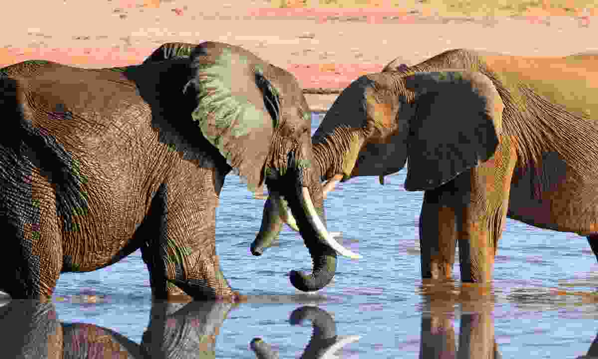 Two elephants and their reflections in Lake Kariba (Shutterstock)