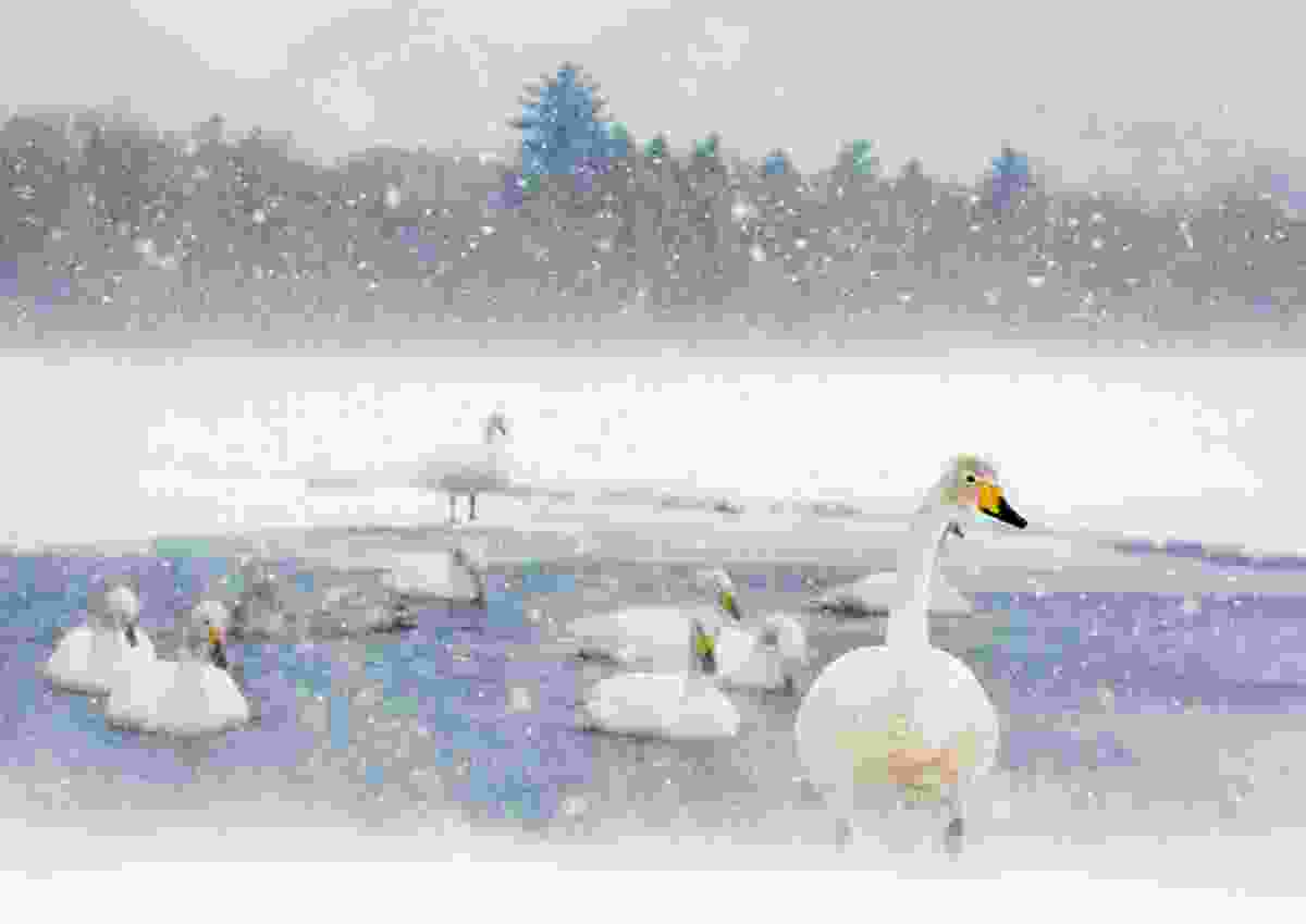 Swan Lake, Hokkaido, Japan (Kellie Netherwood)