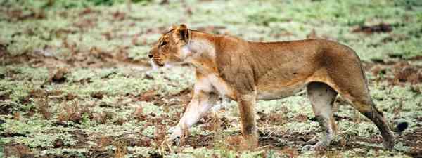 Safari in  Zakouma National Park, Chad, Africa (Mark Stratton)