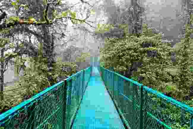 Rainforest in Monteverde, Costa Rica (Shutterstock)