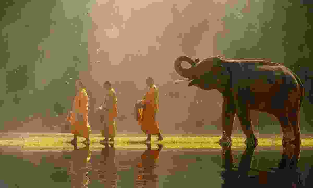 An elephant with monks in Thailand (Dreams)