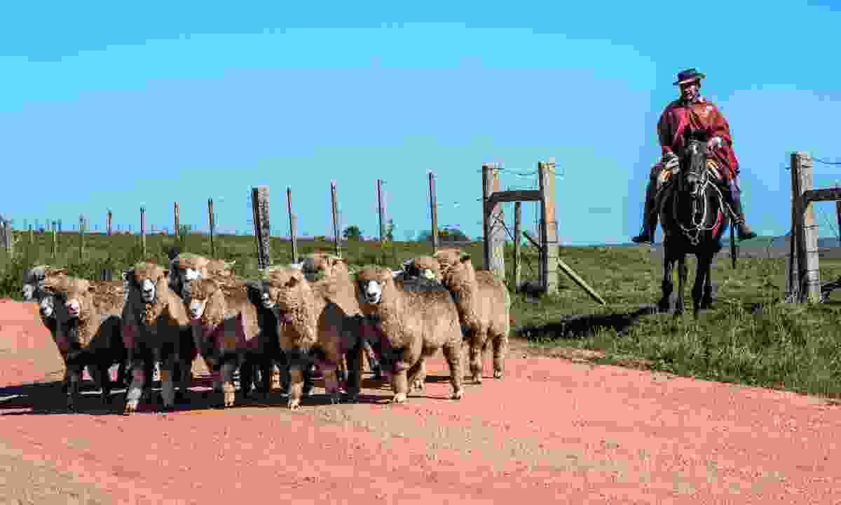 A gaucho in Tacuarembo, Uruguay (Shutterstock)