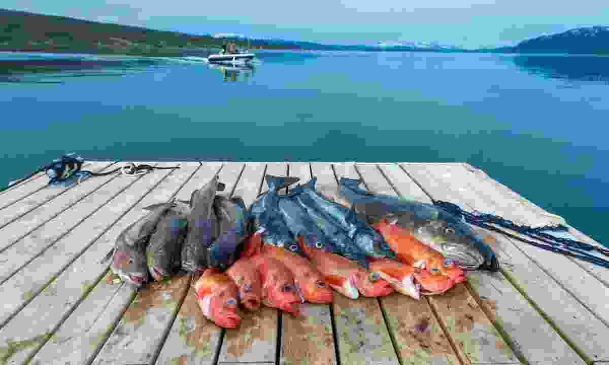 Freshly-caught fish in Tromsø (Shutterstock)