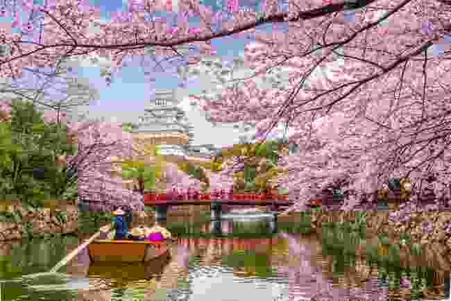 Himeji Castle during cherry blossom season (Shutterstock)