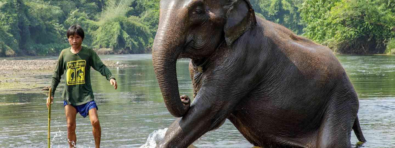 A mahout bathing a rescue elephant in Kanchanaburi (Julia Wainwright)