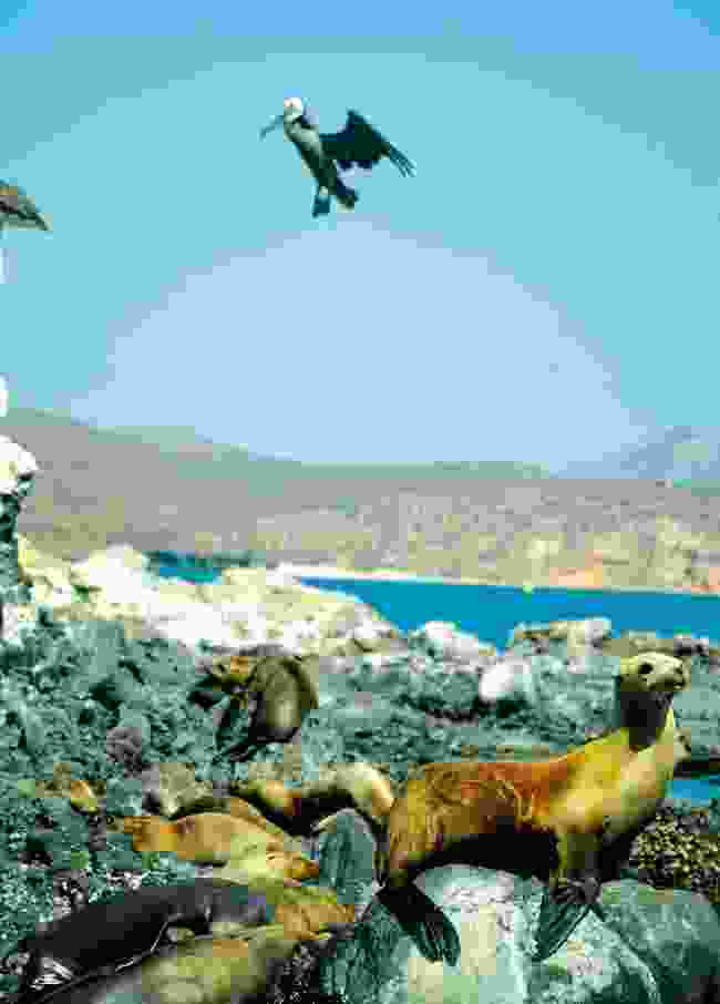 The seals of Baja (Shutterstock)