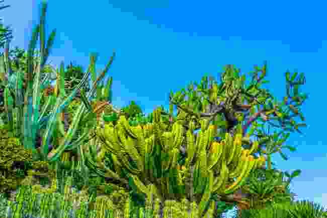 The Jardin Exotique de Monaco covers an area of around 15,000m2 (Shutterstock)