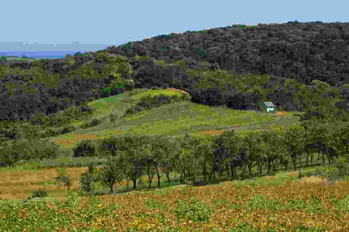 The landscape of Fruška Gora National Park (Shutterstock)