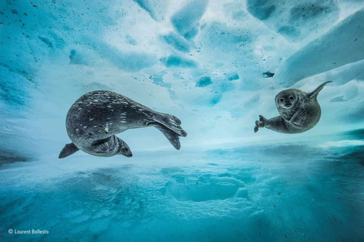 Swim Gym. Finalist 2017 Behaviour: Mammals (Laurent Ballesta)