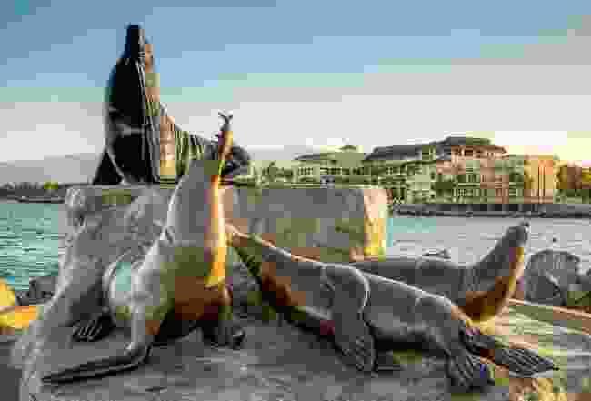 Seals in Baja California Sur (Phoebe Smith)