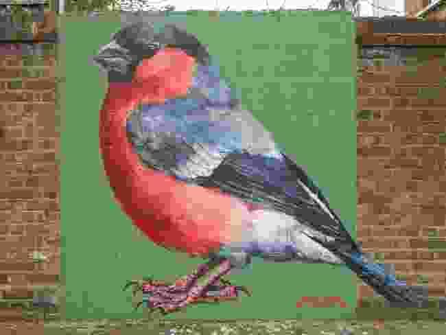 Bullfinch in Turnpike, London (ATM)