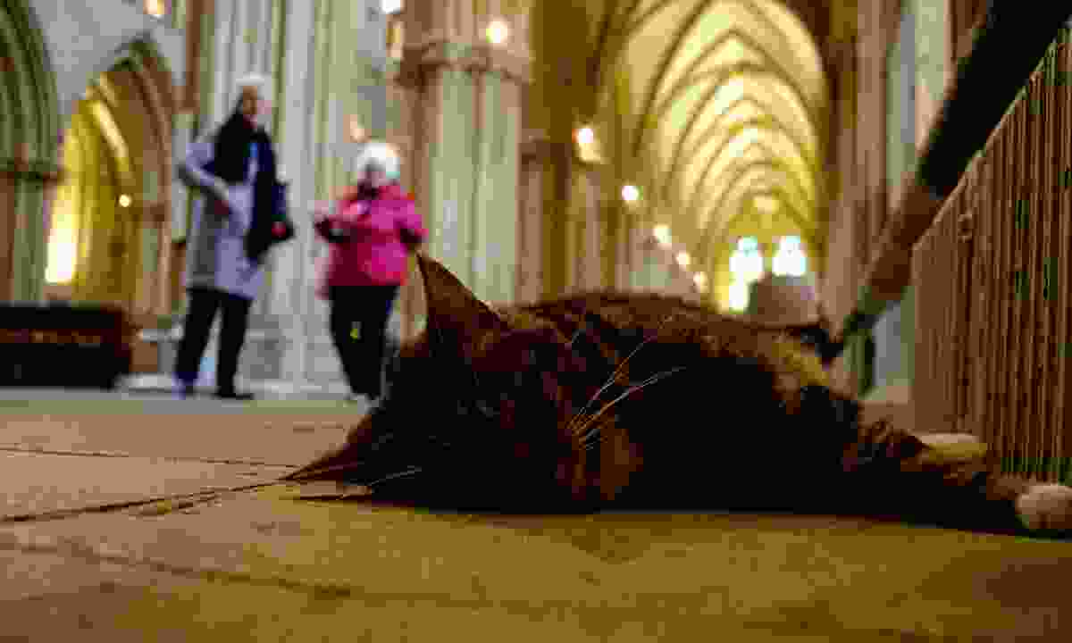 Pangur, the cathedral cat, sleeping next to a radiator (Shutterstock)
