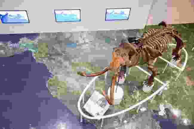 Mammoth skeleton in Hokkaido Museum (Shutterstock)