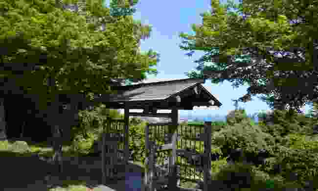 One of Japan's many shinrin-yoku forests (Dreamstime)