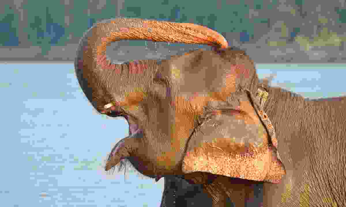 An elephant soaks in a river (Phoebe Smith)