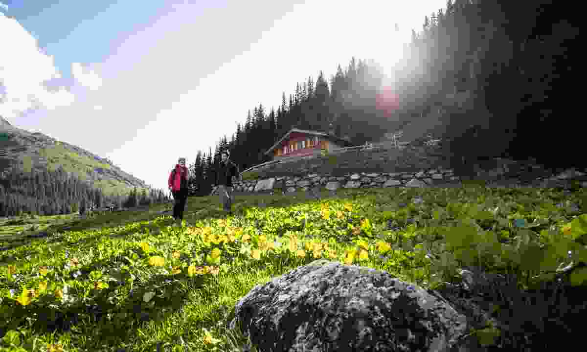 Green fields in St. Anton am Arlberg (Christoph Schoech)