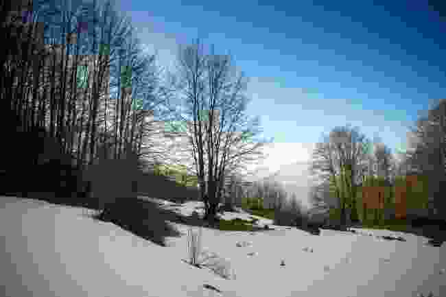 The snow in Pollino National Park, a two hour drive from the city of Matera (Dreamstime)