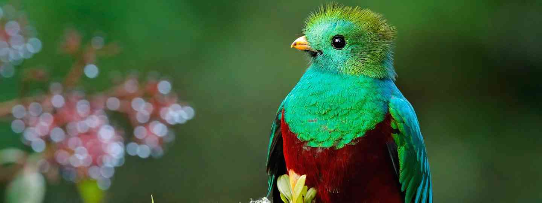 Colourful quetzal (Dreamstime)
