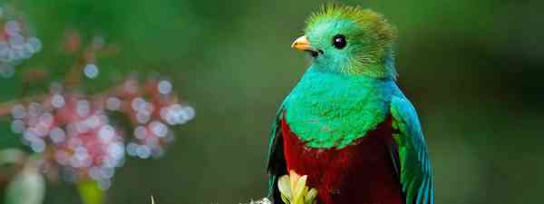 Colourful quetzal (Dreamstime)