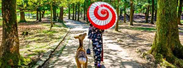 Best things to do in Nara (Shutterstock)