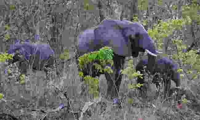 Elephants in Nkhotakota Wildlife Reserve, Malawi (Shutterstock)