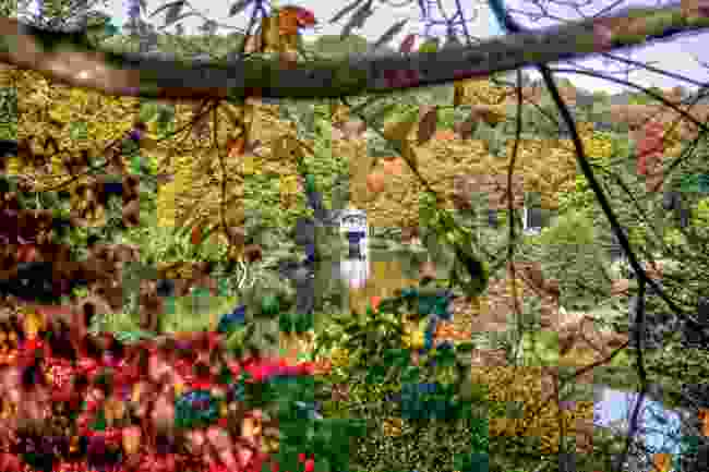 Winkworth Arboretum (Shutterstock)