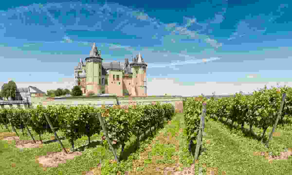 Loire Valley vineyard (Shutterstock)