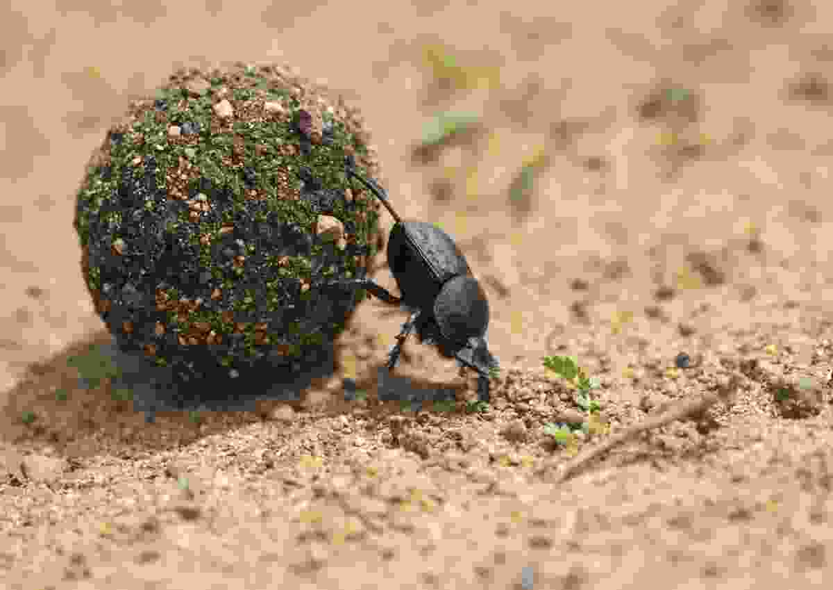 'Hard work' in West Coast National Park, South Africa (Paul Wynn)