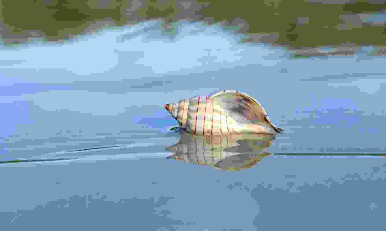 Go shelling at Lovers Key (Jason Boeckman)