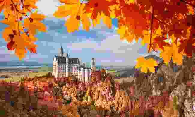 Neuschwanstein castle framed by autumn leaves (Dreamstime)