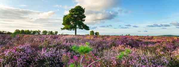 New Forest, Hampshire (Shutterstock)