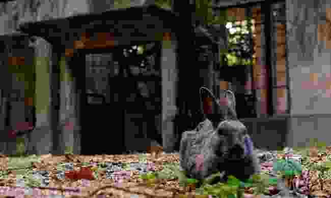 Abandoned factory on Japan's rabbit island, Okunoshima (Shutterstock)