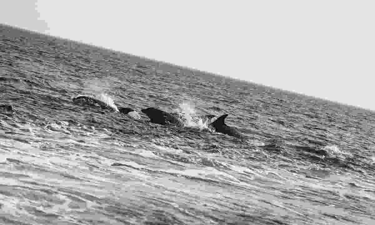 Watch dolphins splash at Malin Beg (Failte Ireland)
