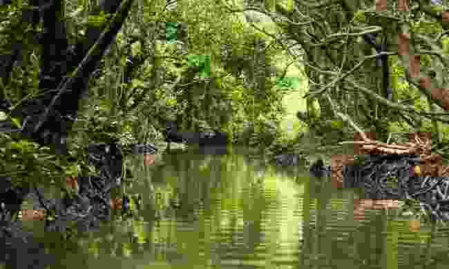Kayak through a mangrove forest in Japan (Shutterstock)