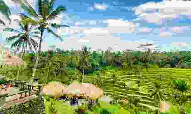 A rice terrace in Bali (Shutterstock)