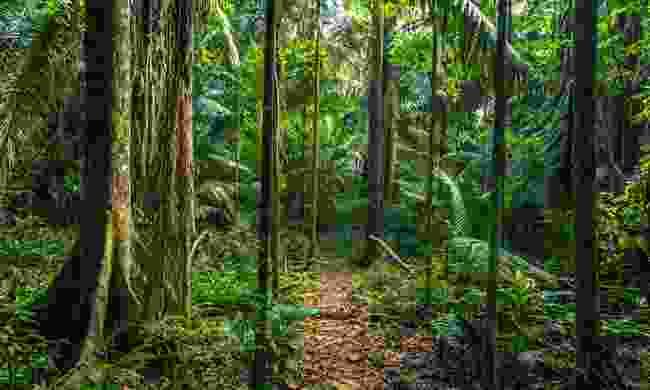 Manú National Park (Shutterstock)