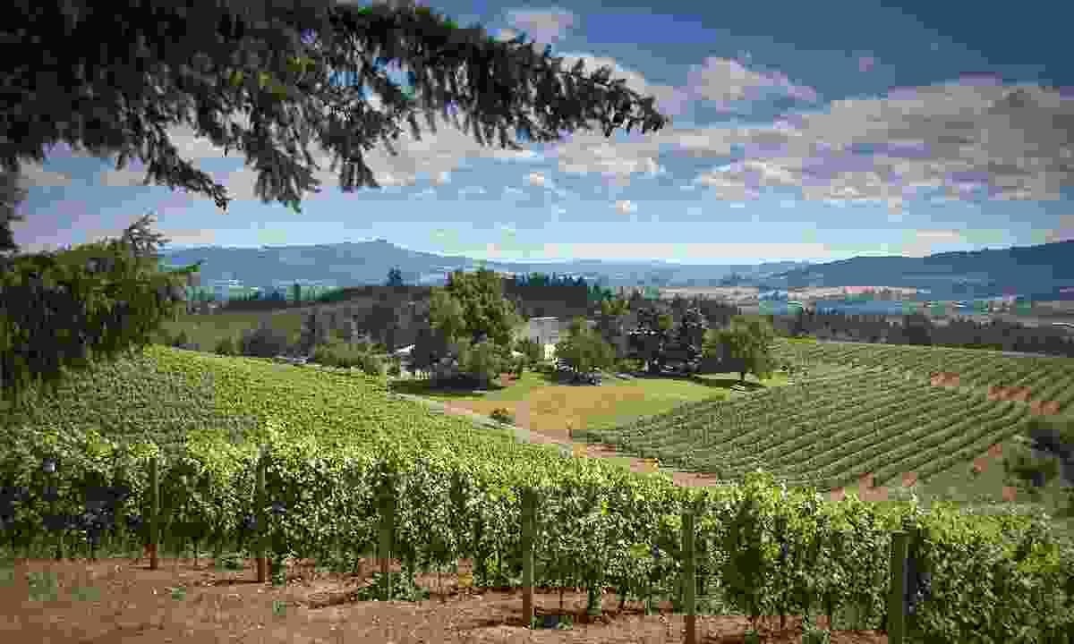 David Hill Vineyard and Winery (Washington County Visitors Association/ Paul Loofburrow)